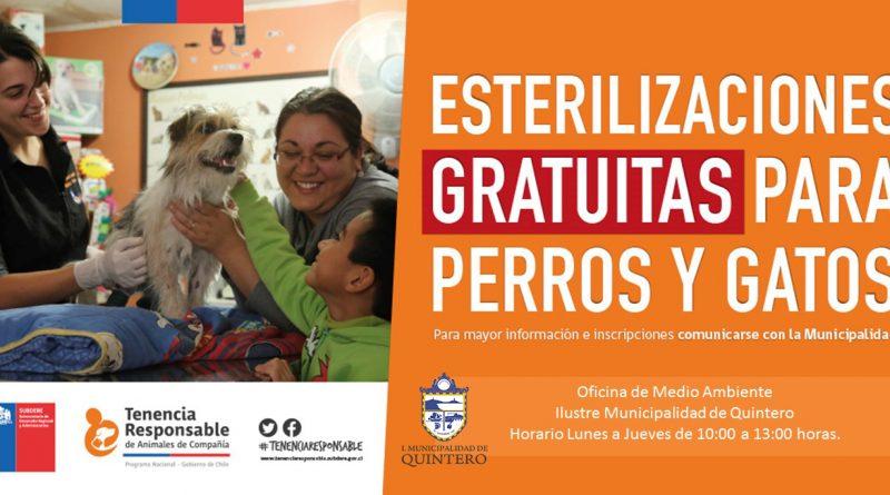 Esterilizacion gratuita de Macotas